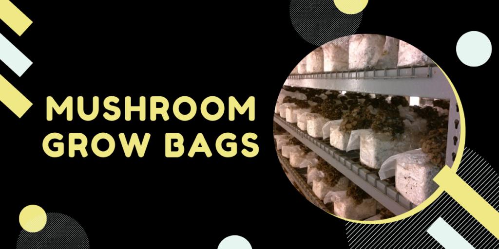 mushroom grow bags