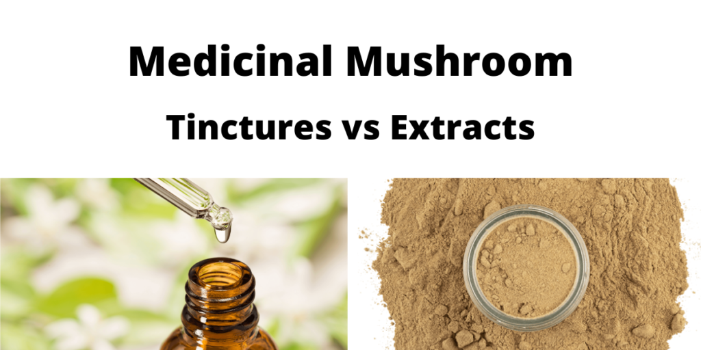 Mushroom Tinctures vs Extracts