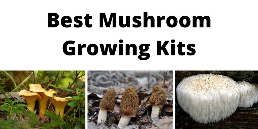 Best Mushroom Growing Kits