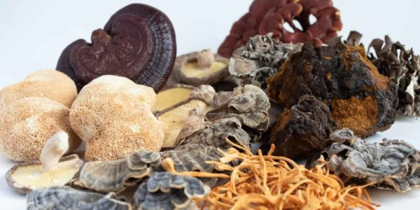 The Truth About Medicinal Mushrooms