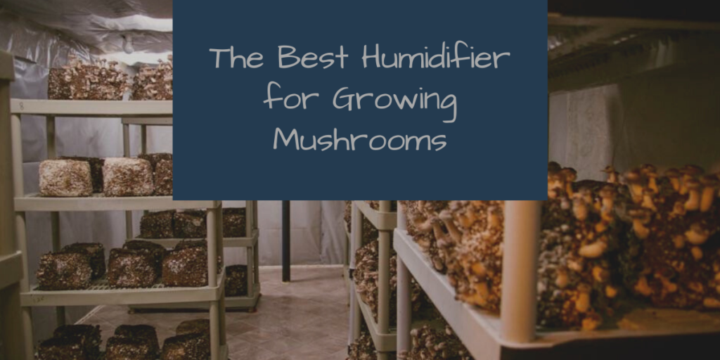 Best Humidifier for Growing Mushrooms