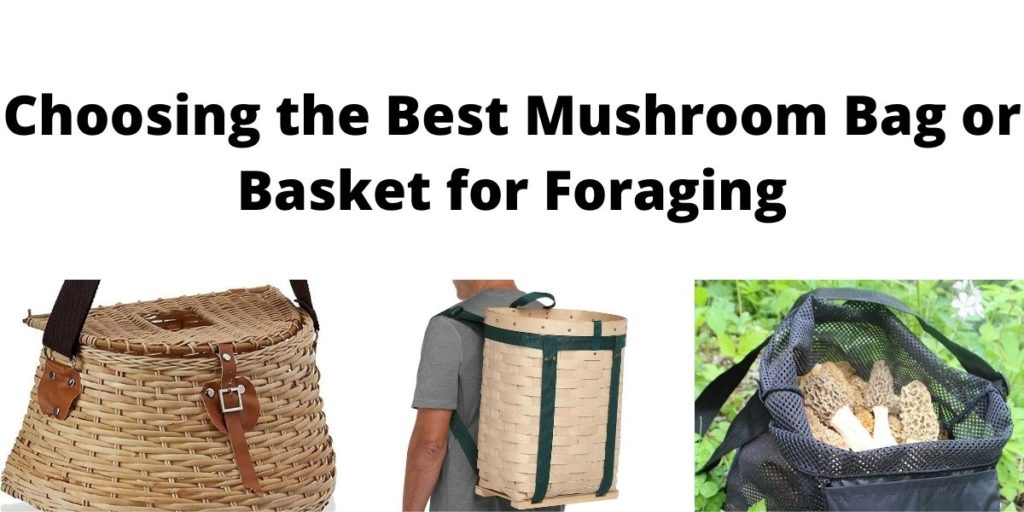 Best Mushroom Basket or Bag