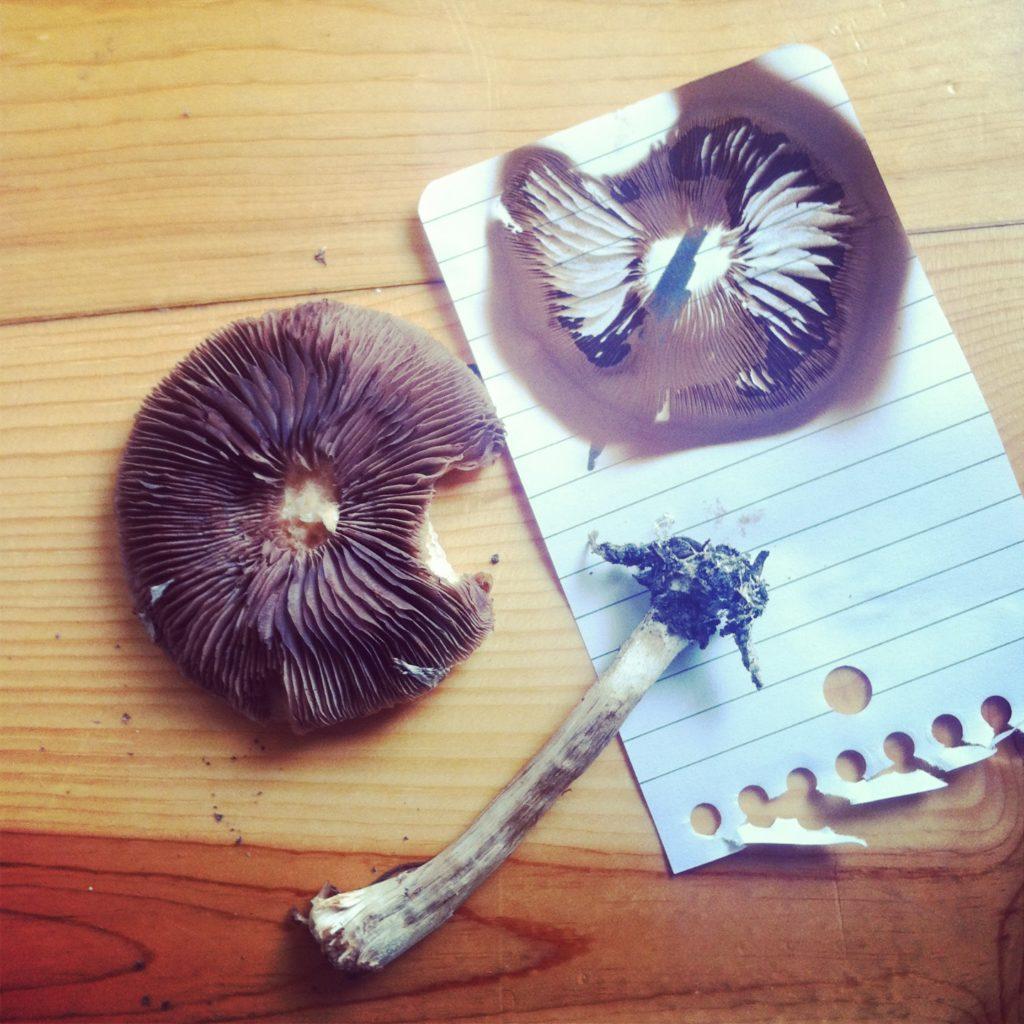 Mushroom Spore Prints