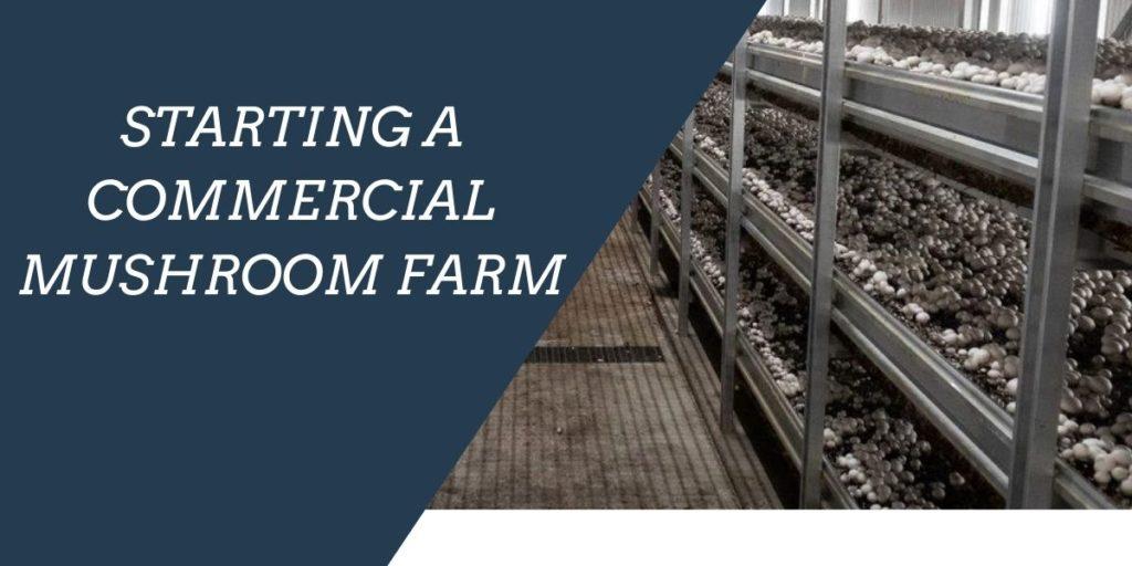 Starting Commercial Mushroom Farm