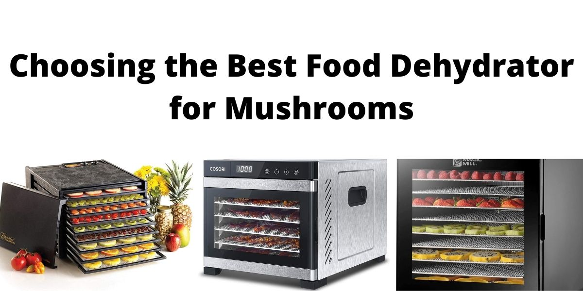 Best Food Dehydrator for Mushrooms