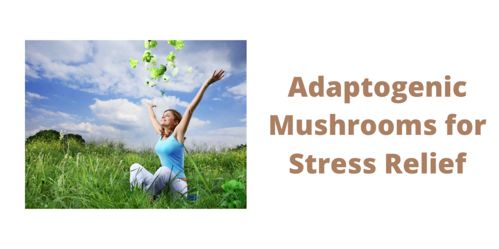 adaptogenic mushrooms
