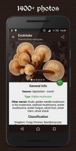Book of Mushrooms App