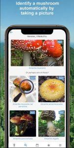 Mushroom Identify App