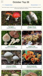 Shroomify Mushroom App