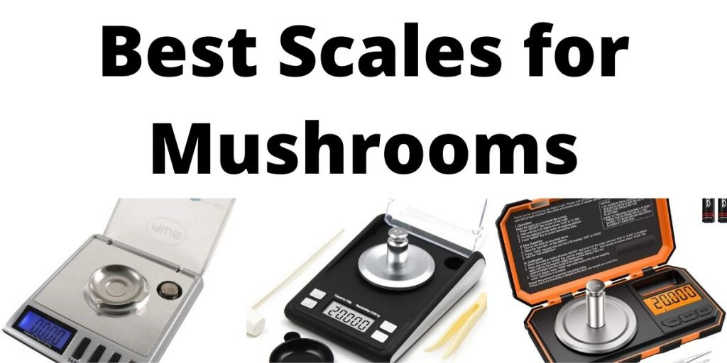 Best Scale for Mushrooms