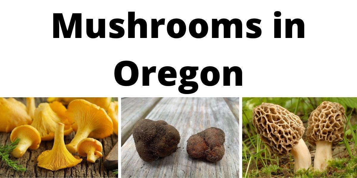 Mushrooms in Oregon