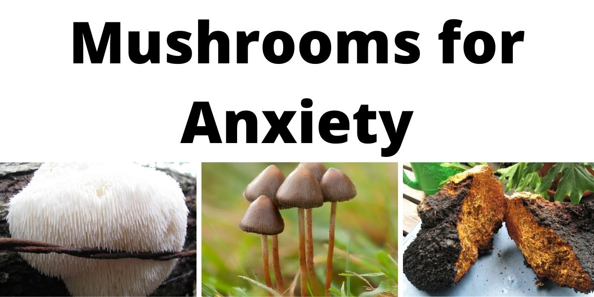 Mushrooms for Anxiety